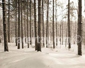 Nature photography, Winter Forest, White, Brown Pine Trees, Rustic Cabin Decor, Neutral Wall Art