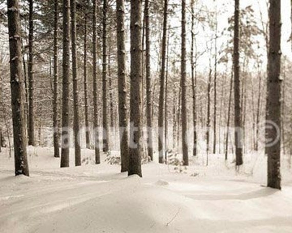 Pine Forest Print, White, Brown, Nature photography, Winter Pine Trees, Rustic Cabin Decor, Neutral, Men