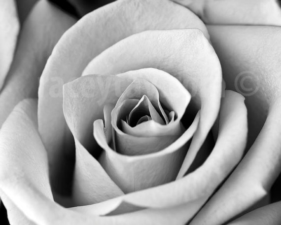 Bedroom Wall Art, Black and White Flower Photography, Rose, Close Up Macro, Gray, Neutral Decor