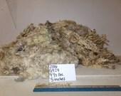 White Boarder Leicester Romney Cross Wool G924 2016