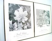 Vintage Ansel Adams Framed Photography Prints
