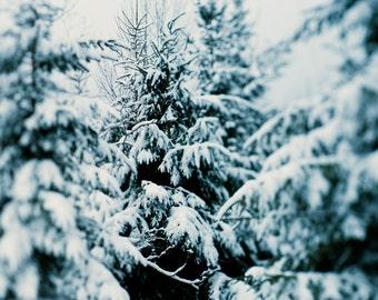 Winter Hush 03 ||| Winter Landscape Photography | Evergreen Trees in Snow |  Nature Photo | Cabin Decor | Winter Nature Photo