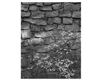 Fine Art Black & White Nature Photography of Stone Wall and Wild Flowers in the Missouri Ozarks