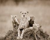 Animal Nursery, Baby Chee...