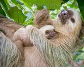 Mom and Baby Sloth Snuggling Photo, Nursery Art Print, Baby Animal Photograph, Safari Baby Nursery, Wildlife Photograph, Mom and Baby Animal
