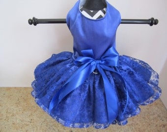 Dog Dress  XS  Navy with Lace By Nina's Couture Closet