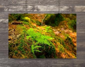 Ferns,peaceful forest,sunbeam on ferns,cool,Nature Photography,ferns,woodland,fresh,forest floor,mossy,nature home decor,forest green,zen