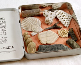 11 item fossil collection starter kit in vintage cigar tin made in Holland