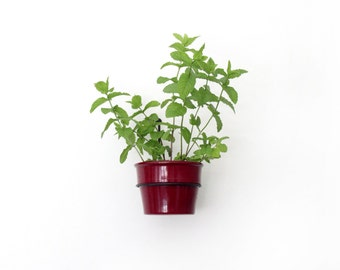 Plant-hold, Wall Mount Metal Flower Pot Ring Holder
