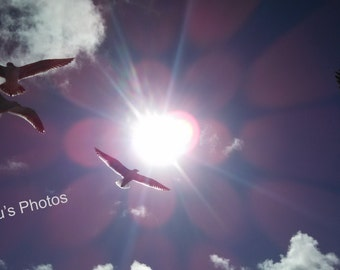 Seagulls Soar, Bird Photography, Personalized Cards, Prints, Home Decor