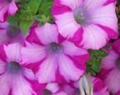Custom Listing - Flowers for Gay