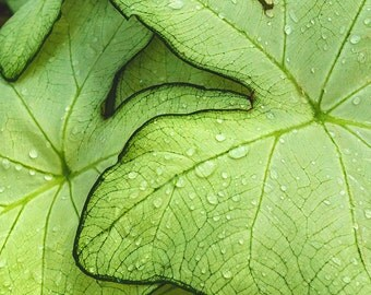Tropical Green Leaf Wall Art, Abstract Leaves Photograph, Abstract Floral Photo, Abstract Nature Print, Flower Photography