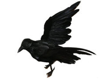 10 Inch Black Feather Crow (Renee), Fake Crow for Halloween Decorating, Costumes, Parties