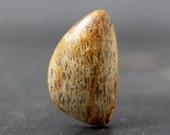 Dinosaur Bone Fossilized Cabochon, Jewelry, Pendant, Natural, Genuine Fossil - Rustic, Primitive Jewelry Designs, Light Brown, Tan, Beige