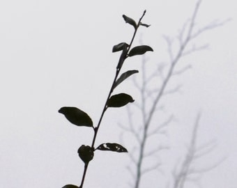 Black and White Leaf Silhouette, Minimalist Photography, Miksang Photography, Fine Art Metallic Print, Zen Photography, Zen Art, 4x8 inches