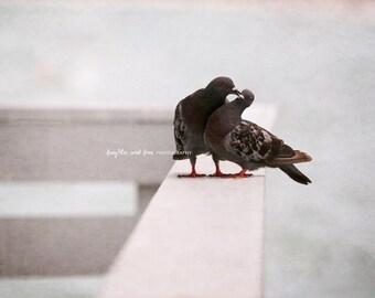 Give me a Kiss Fine Art Photography Pigeons Pigeon Bird Animal Gray Grey Blue Monochrome Minimalist Valentine Love Home Decor Wall Art