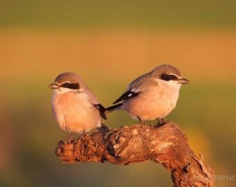 Nature Photography, Home Decor, Wall Art, Fine Art Print, Photography, Gift for him, Christmas gift idea, Art Print, Birds, Couple