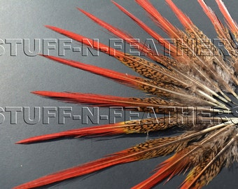 Natural Red tip feathers - Golden pheasant thin spiky real feather for millinery, crafts, jewelry making / 6-8 in (15-20 cm) long / F68-6