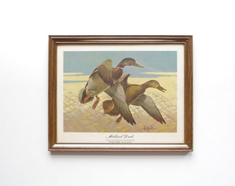 Mallard Duck Framed Print - Les Kouba - Wildlife Art - Wall Hanging