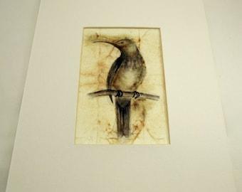 Bird on Tea Bag