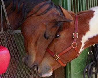"""Horses. """"Best Friends"""". Equine Photography. Cheri Lewis Photography. Color Print. Fine Art Photography. Nature Photography."""