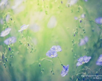 Spring Serenity In Bloom -Blue Flax Flowers Blooming In Dreamy Sunshine  Bokeh -Green Purple Wall Art -Fine Art Photo Print Metallic Paper