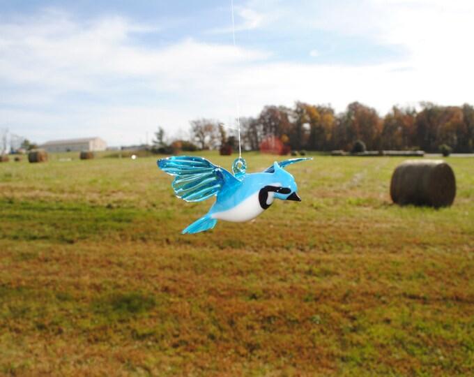 e36-402 Large Blue Jay