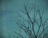 Bird in tree photo, birds photography, bird art, bird wall art, tree photo, shabby home decor, turquoise, teal