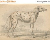 SALE Antique Hand Colored Steel Engraved 1843 Book Plate Print Jardine Naturalist Library Mammalia Canine Dog Hound Plate #14