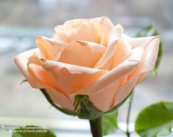 Cream Rose - Polymer Clay Flowers
