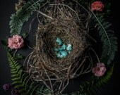 Still Life Photography, Bird's Nest Photograph, Fine Art Photography, Nature Photograph, Floral Photography, Shabby Chic, Rustic, Vintage