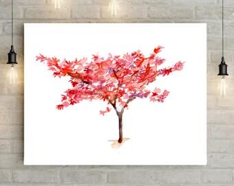 Japanese Maple Tree Etsy