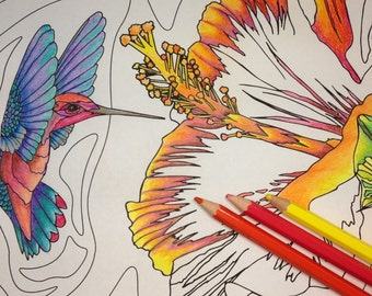 Hummingbird Hibiscus Adult Coloring Page
