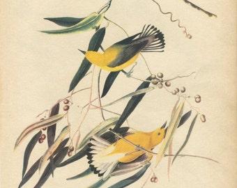 Audubon Prints, Vintage Bird Prints, Bird Illustrations, Bird Lover Gift, Antique Bird Prints, Bird Prints, Bird Art Print