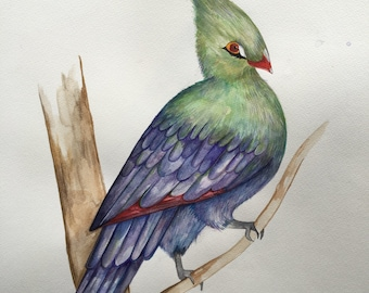 Exotic bird, Turaco! Original artwork.