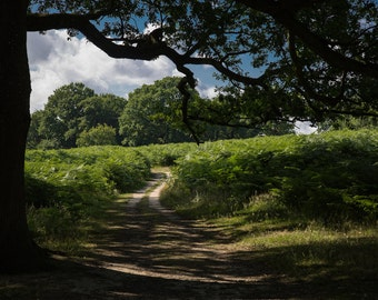 Nature Trail Photograph - London Photography - Richmond Park - Nature Print - Trail