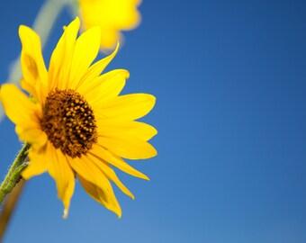 Printable Sunflower and Blue Sky Macro Abstract Color Digital Photograph