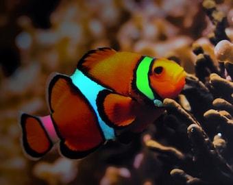 Nemo Clownfish LED Painting  P-C59