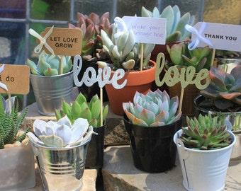 20 Wedding Favor Tag/Tags - Say I Do Succulents