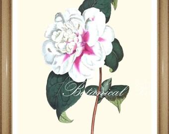 "Camellia Print. #2 White Flower Print. Botanical Print. 5x7"",  8x10"", 11x14"""