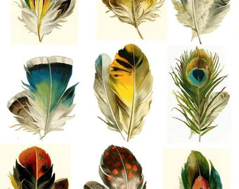 Set of 9 feathers - Temporary tattoos