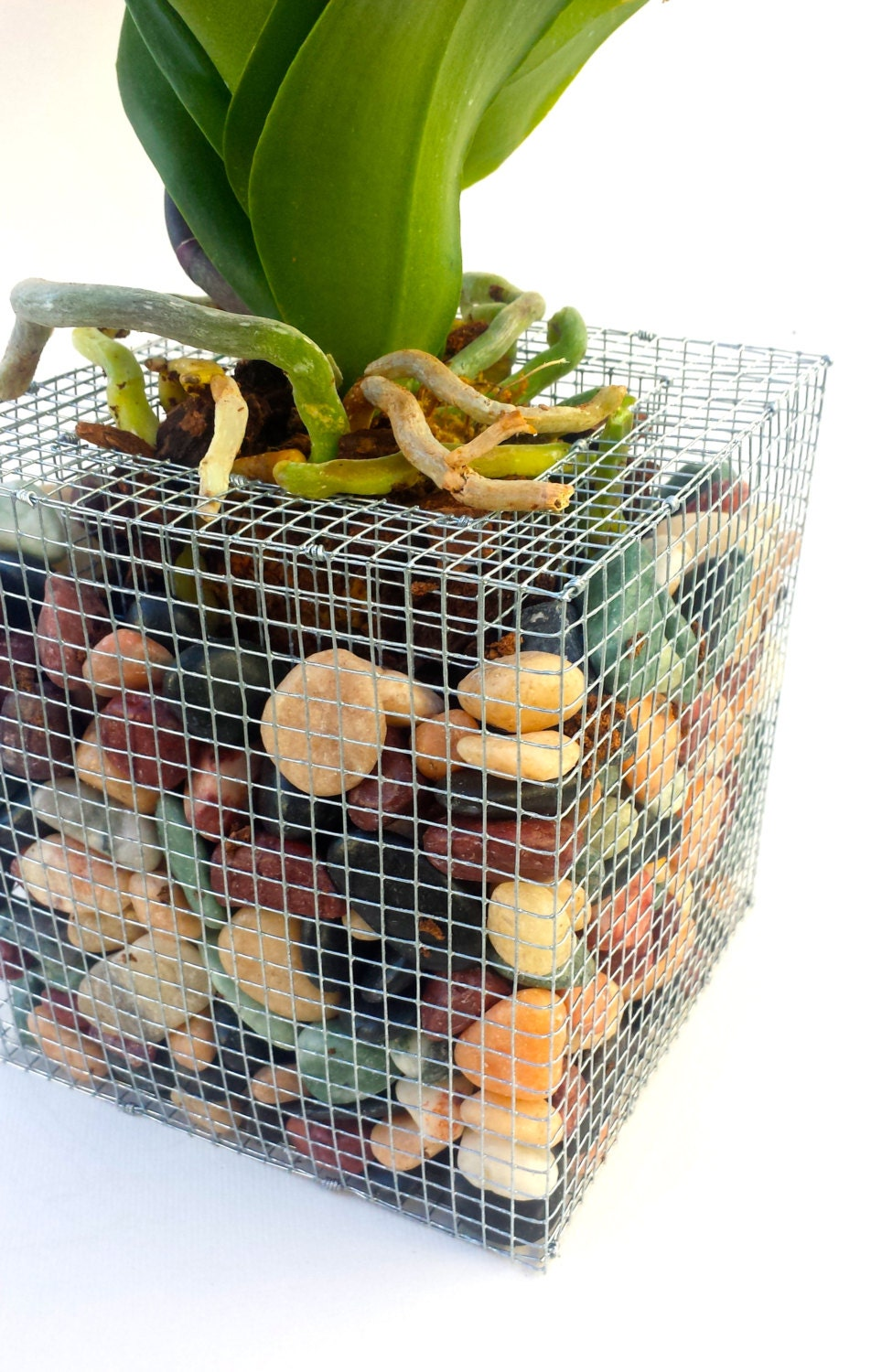 Gabion Style Orchid Pot Rock Filled Wire Cage Planter
