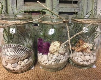 Mason Jar Terrarium Airplant Kit