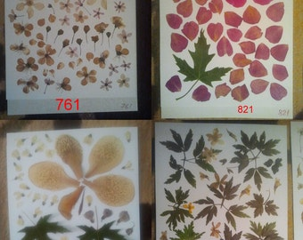 Pressed flowers, dried flowers, pink peonie, pressed petals, vintage colors,Daisy,Gypsophila, Oshibana supplies #761 #821 #874 #825
