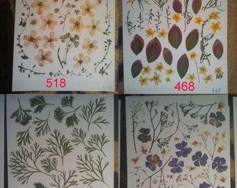 Pressed flowers / oshibana assortment - real flowers leisure arts  #518 #468 #469 #456