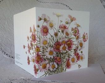 Fleabane Daisy Greeting Card