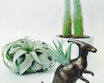 Small Bronze Parasaurolophus / Parasaur Dinosaur Planter Air Plant; Dinosaur Planter; Air Plant; Desk Accessory; Home Decor; Gift Idea