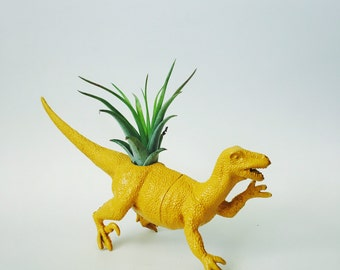 Large Yellow Velociraptor Dino Planter with Air Plant; Dinosaur Planter; Velociraptor Dinosaur Planter; Air Plant; Tillandsia; Dino Planter