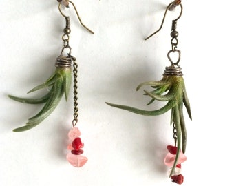 Air Plant Earings