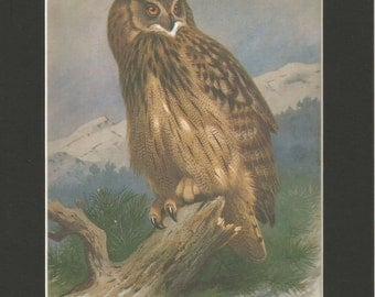 beautiful vintage 1970s  eagle owl bookplate watercolour print by thorburn  .